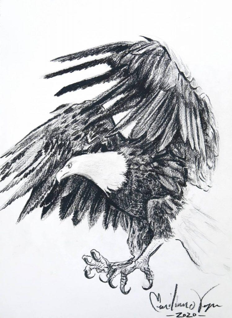 """$24,11""""x14"""" Eagle Drawing. Artist: Emiliano Vega"""