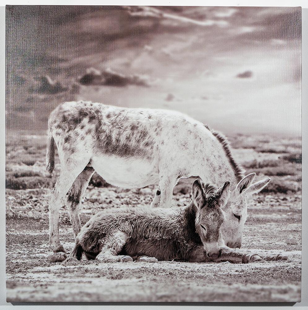 Benevolent (30 x 30 - canvas print), C. Jewell, $500