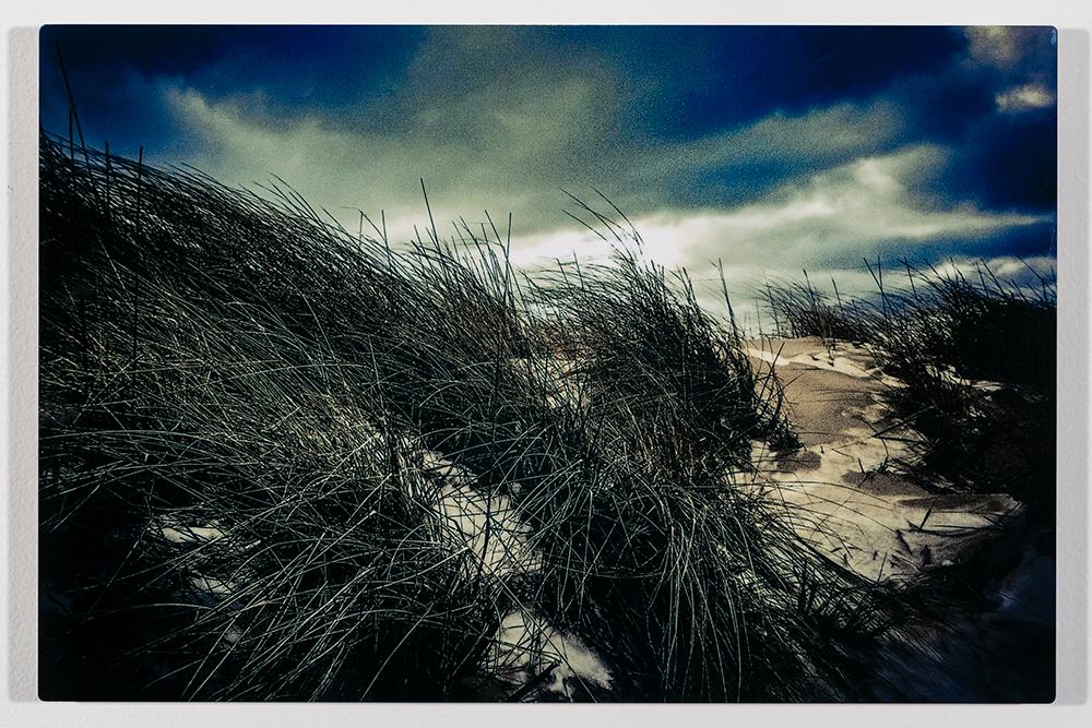 Dunes Grass Ludington (12 x 18 - photogrpahy), C. Speltz, $200
