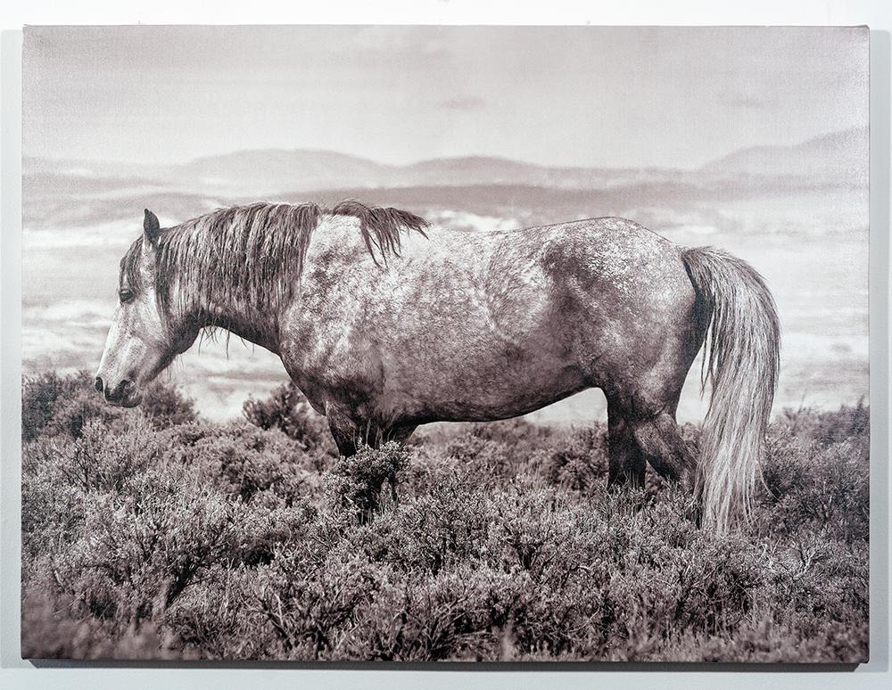 Lead the Way (30 x 40 - canvas print), C. Jewell, $500