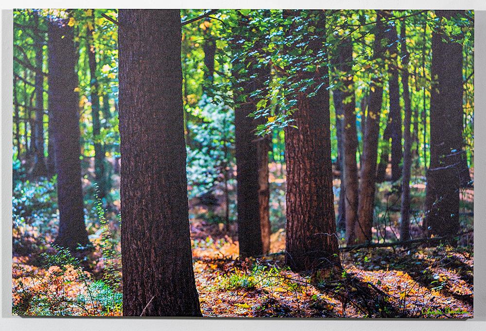CHARLES BONHAM - 'Whiting Forest' - Photo - 24 x 36 - $259