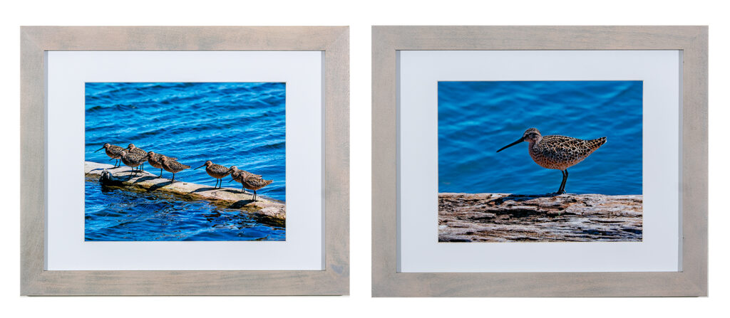 KEVIN NOBLE - Dowitchers at the Point - Photgraph - 15.88x13 - $85 for pair